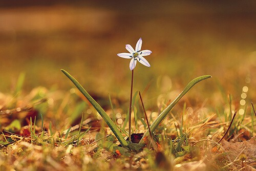תופעות לוואי פרחי באך
